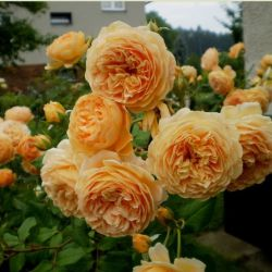 Crown Princess Margaretta