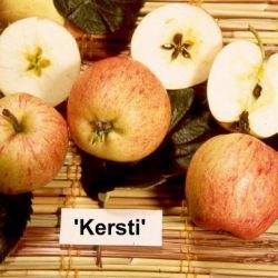 Яблоня Керсти