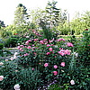 Mein Schoener Garten и др. (Кордес)