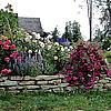 Розы Кордеса в ассортименте